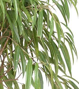 Porte plantes int rieur trouvez le meilleur prix sur for Acheter plante interieur
